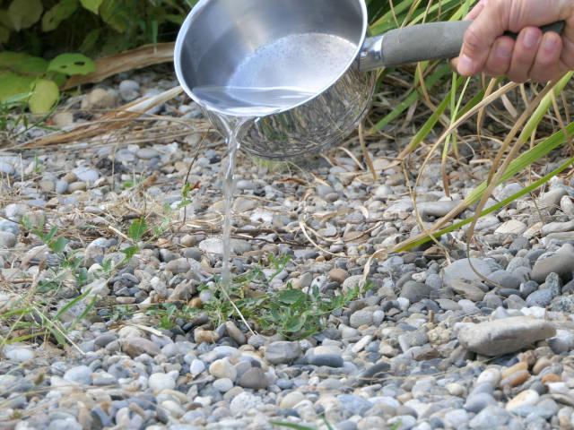 Désherbage naturel : quelles solutions ?