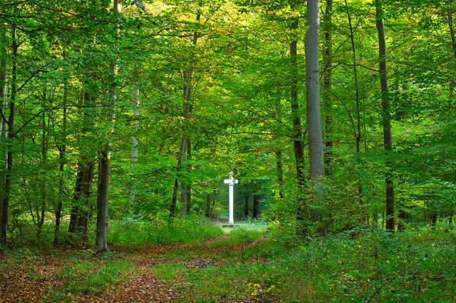Forêt de Compiègne (Les plus belles forêts françaises)