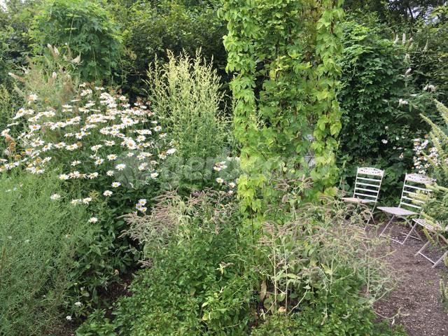 Quelles plantes pour un jardin luxuriant ?