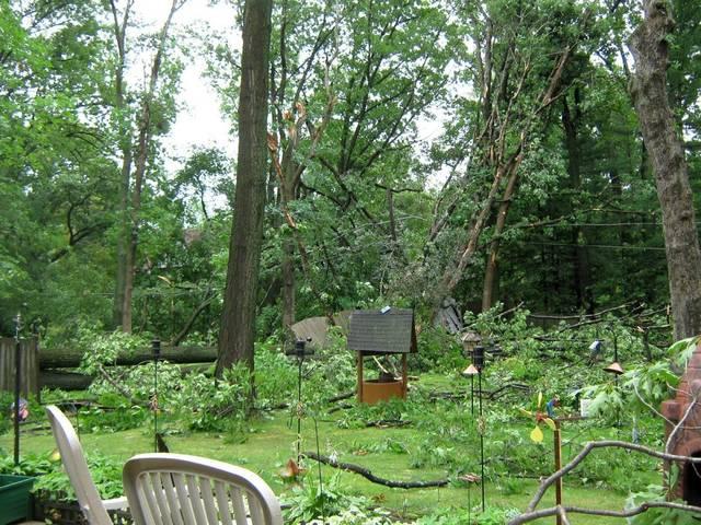 Fortes pluies, grêle, vent : que faire au jardin après un orage ?