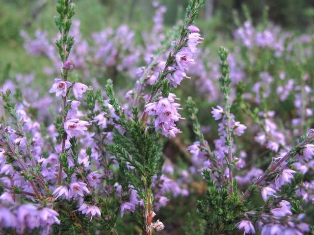Les plantes mellifères en fleurs en automne