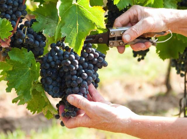 Outils pour récolter facilement les fruits et les légumes