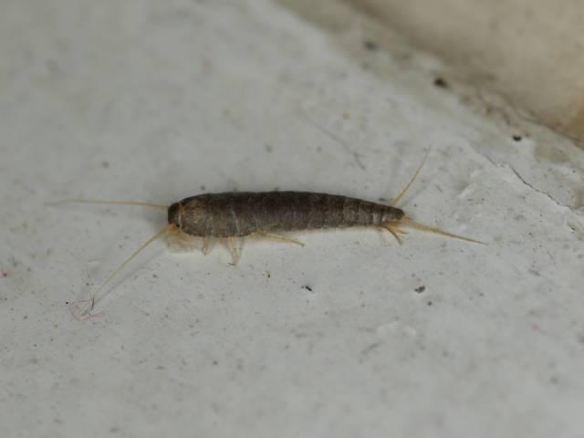Les Insectes Les Plus Courants Dans La Maison