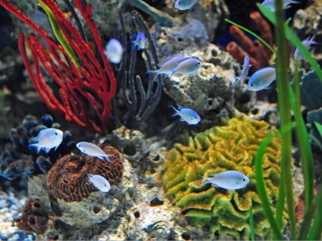 Un aquarium d'eau de mer : atouts et contraintes