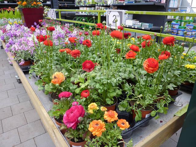 Jardin Et Confinement Conseils Debut Avril