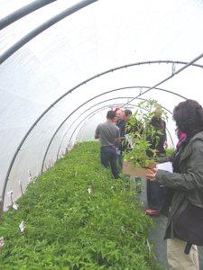 Porte ouverte, vente de plants - Pont-Melvez - Avril 2014