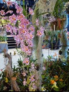 8ème Salon International de l'Orchidée - Bouc Bel Air - Février 2015