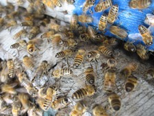 Ateliers & formations - L'univers fascinant des abeilles - Rayol-Canadel-sur-Mer - Avril 2015