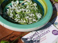 Ateliers & formations : La cuisine des plantes sauvages