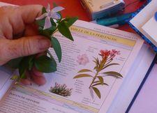Ateliers & formations : Initiation à la botanique