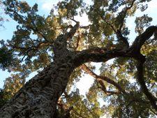 Ateliers & formations : Il était une fois un arbre