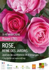 Rose, reine des jardins - Rouen - Rouen - Février 2016