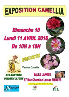 Société Nantaise d'Horticulture - exposition de Camellia - Nantes - Avril 2016