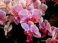 Journées des Orchidées 2016 - Nature et Découvertes 10e édition - Salignac-Eyvigues - Mai 2016