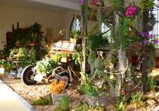 2ème exposition internationale d'orchidées  - Pontpoint - Juin 2016