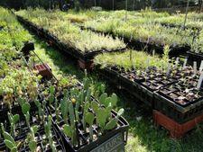 Atelier & formation - De la pépinière au jardin au Domaine du Rayol