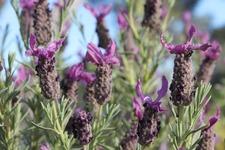 Ateliers & formations - Gérer son stress par l'aromathérapie au Domaine du Rayol