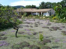 Ateliers & formations - Couvre-sols et gazons alternatifs au Domaine du Rayol