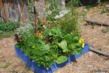 Stage « Aménager mon petit jardin » à Terre vivante - Mens - Avril 2017
