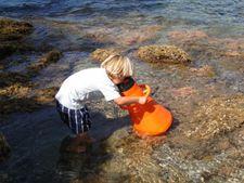 Activités familles : Les pieds dans l'eau - Domaine du Rayol