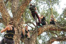 Activité : Grimpez dans les arbres au Domaine du Rayol - Rayol-Canadel-sur-Mer - Février 2017