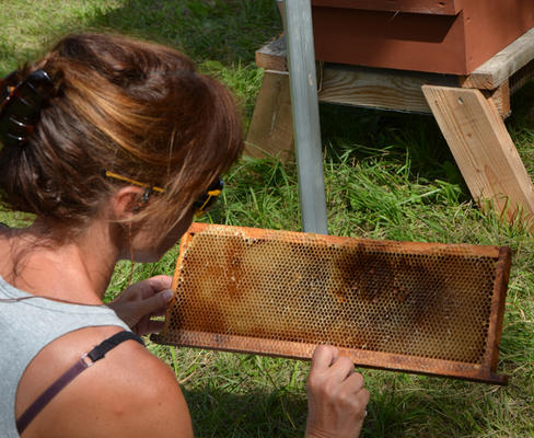 """Stage Terre vivante d'apiculture : """"Elevage de reines"""" - MENS - Juin 2019"""