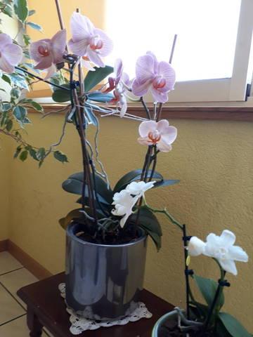 Pousses d'orchidée - 28367