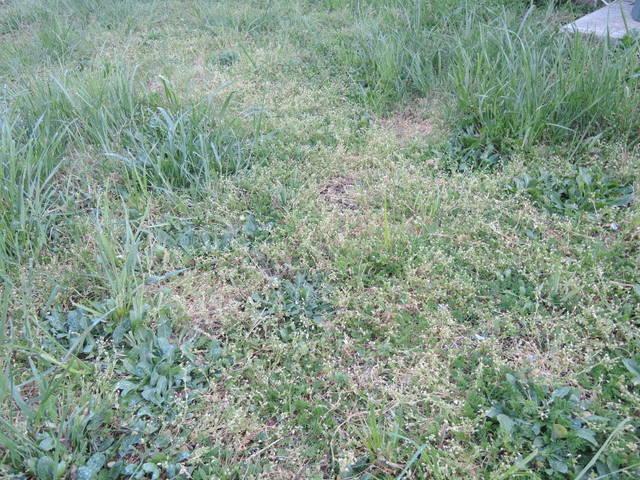 Problème pelouse - 28604