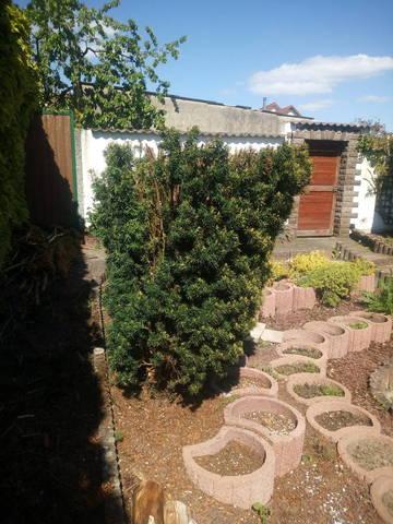 Puis je utiliser le broyat d'if dans mon jardin? - 28858