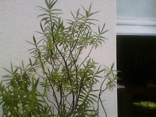 Nom de plante - 29159