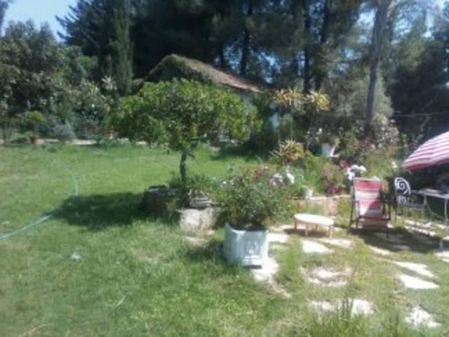 A quelle époque je peux planter : olivier, figuier , avocat et arbre à fleurs - 29400