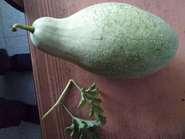 Quel est ce légume? - 29418