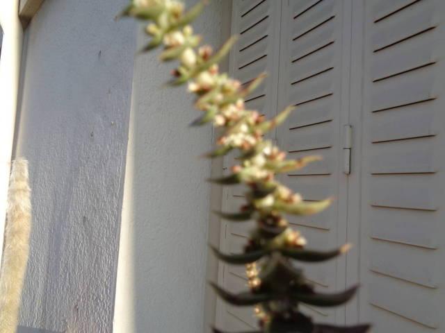 Nom d'une plante - 29470